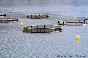 fish farm photo from Mercola.com
